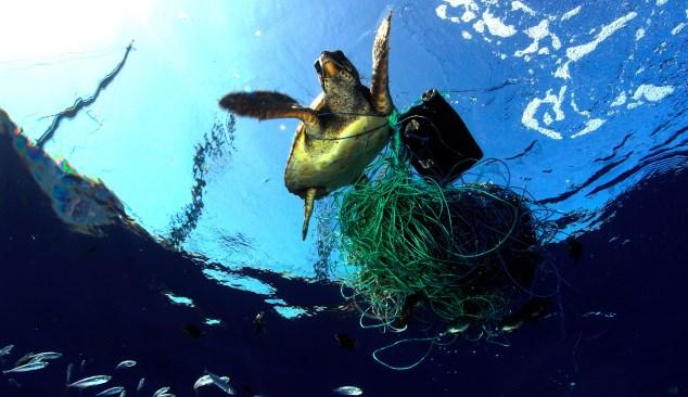 Combate ao lixo marinho